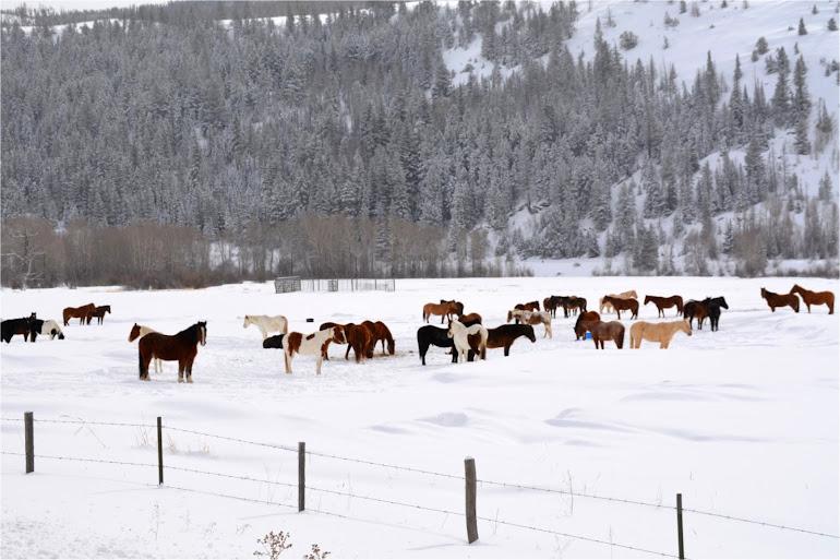 Horsing Around In the Snow - Winter Park Colorado