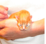 http://wheresthekarma.blogspot.com/2013/11/how-to-bottle-feed-kitten.html