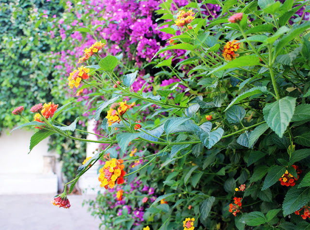 Flowers in Sevilla, Spain