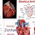 Ciri Ciri Gejala Penyakit Jantung Dan Cara Mengobati Alami