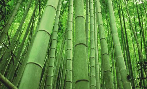Bamboo Eco Friendly1