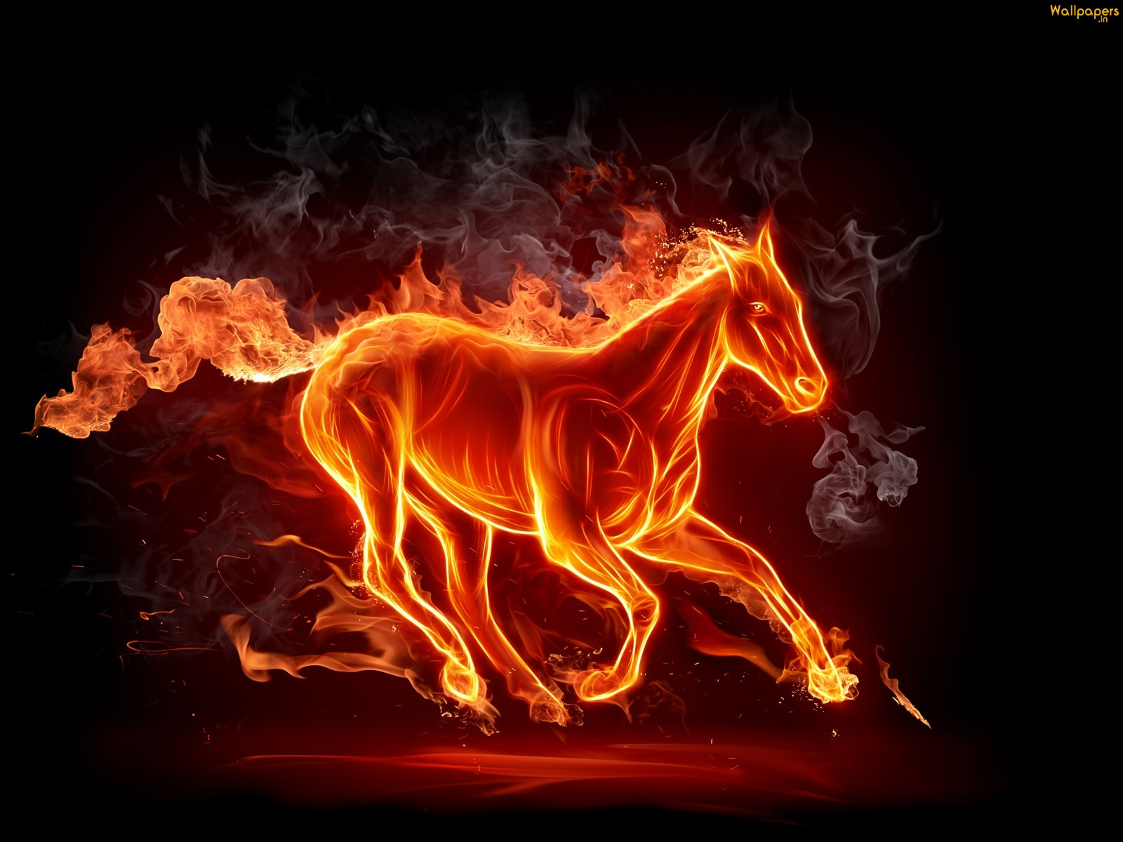 The Flaming Stallion Horse Wallpapers Gallery Photos