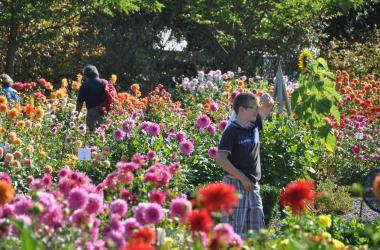 Habile direction la ville le festival des dahlias et jardins 2015 - Espace emeraude valognes ...