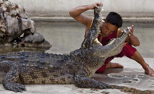 adiestrador de cocodrilos