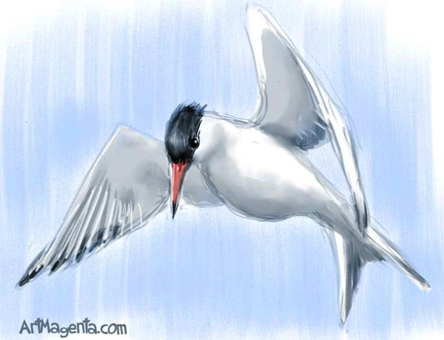 Common Tern. Bird sketch by ArtMagenta