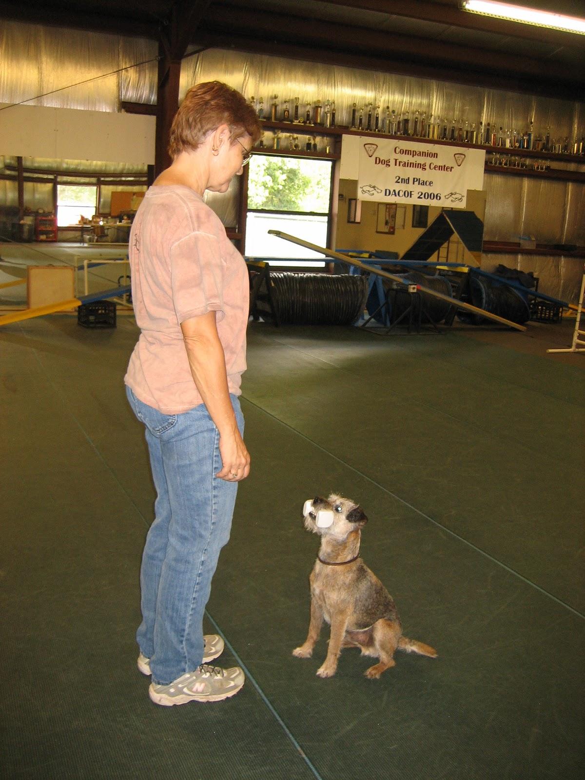companion-dog-training