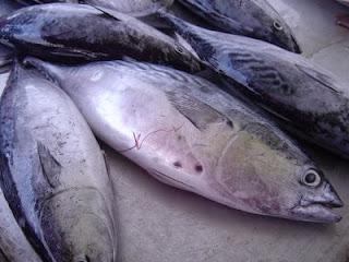 nutrisi ikan
