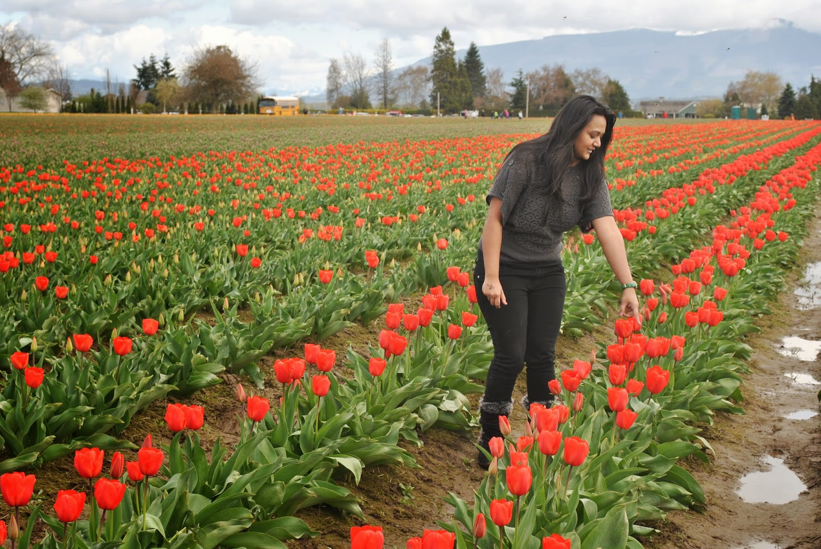 Tulip festival, tulip flowers, girl in a flower garden, Beautiful flowers and beautiful girl, Places to visit near Seattle,