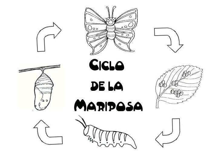 Menta Más Chocolate - RECURSOS PARA EDUCACIÓN INFANTIL: Ciclo de ...