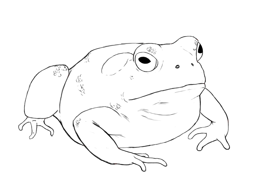 At this point, your toad should be mostly finished. As you can tell ...
