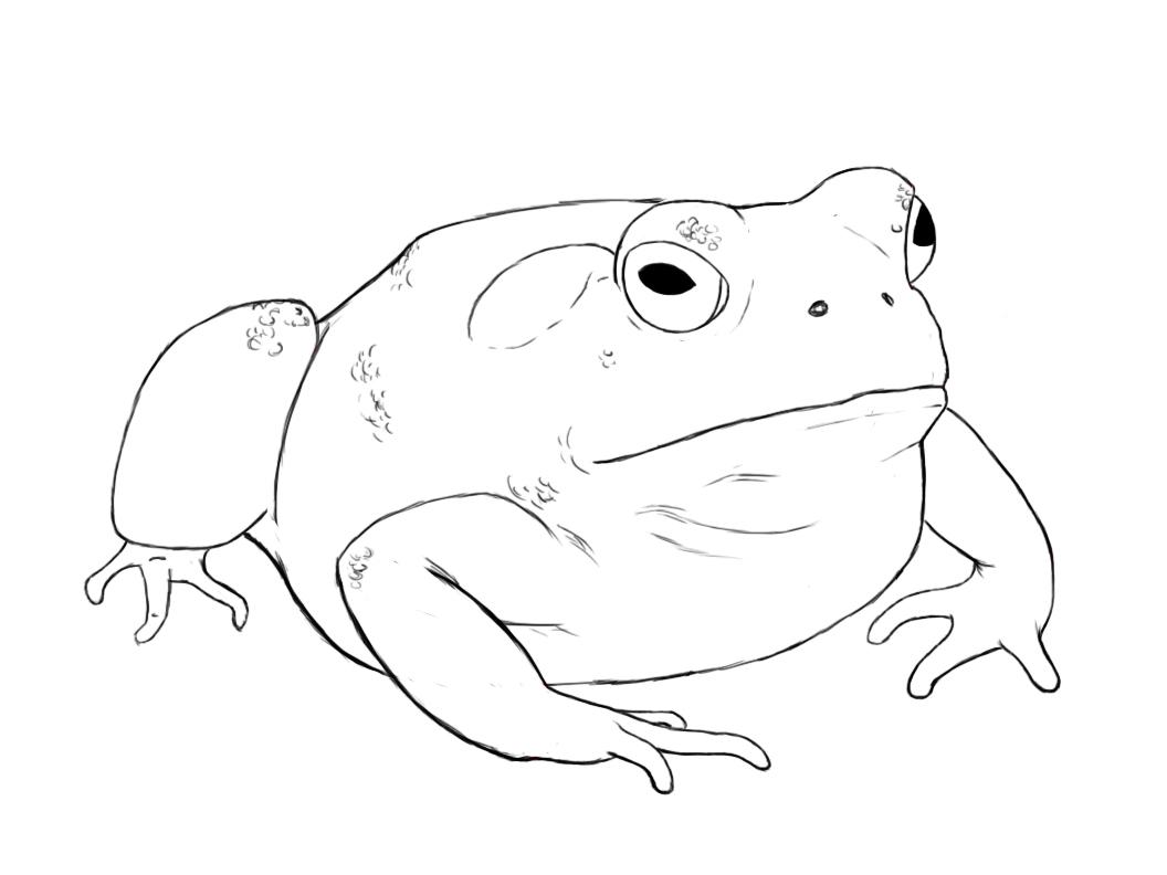 Frog drawings focused