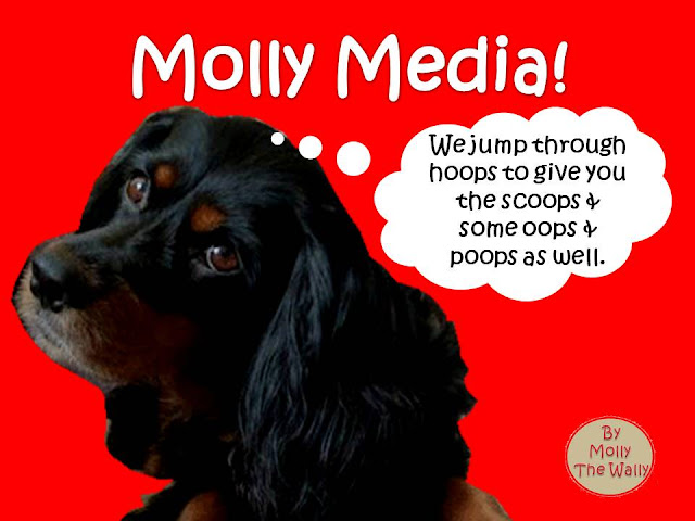Molly Media & Molly The Wally!