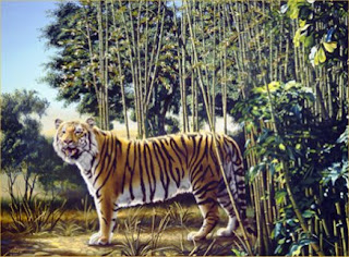 the hidden tiger optical illusion