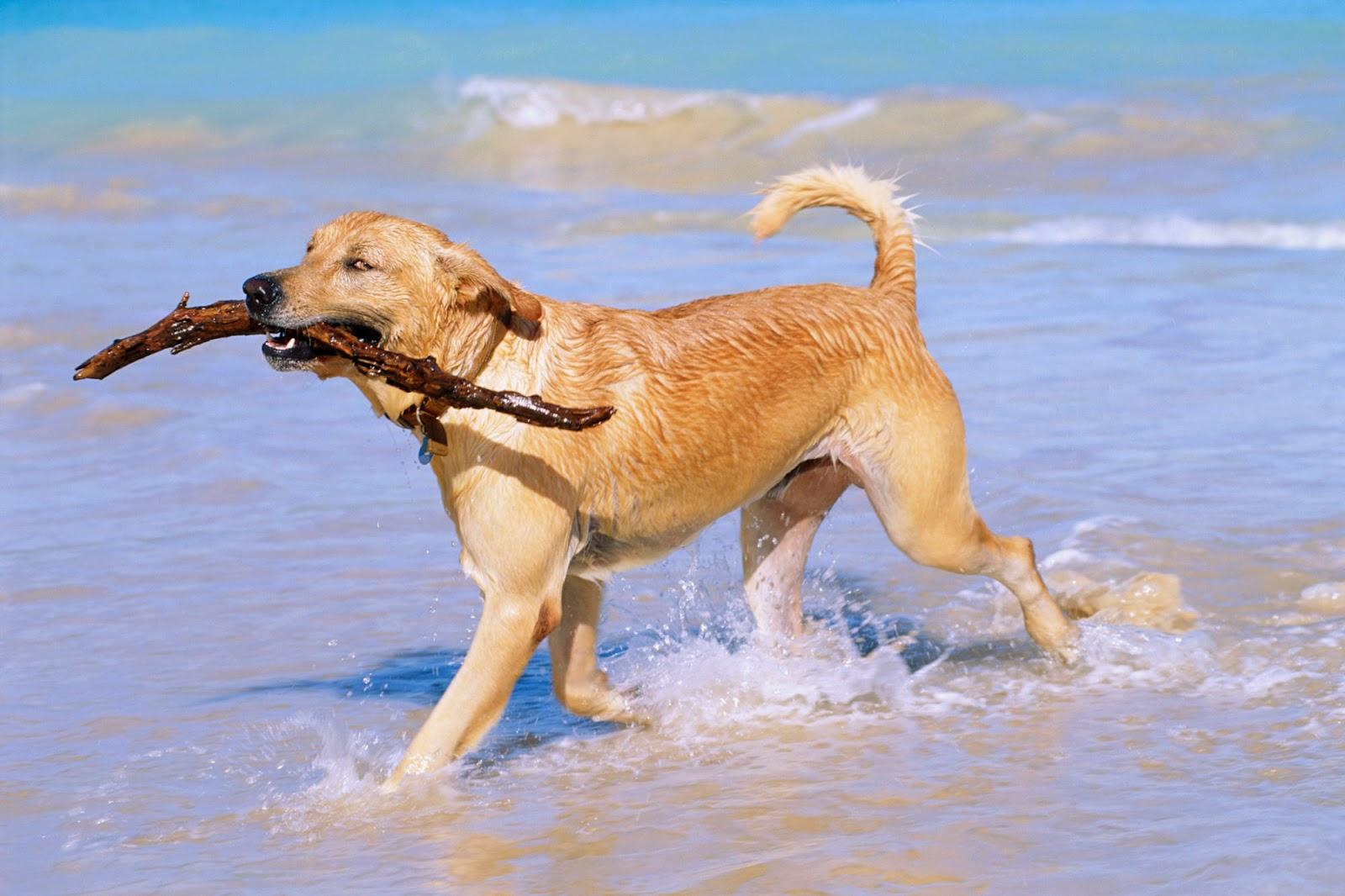 Los Juguetes para Perros