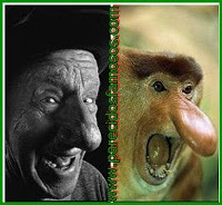 Parecido Jimmy Durante y mono narigudo