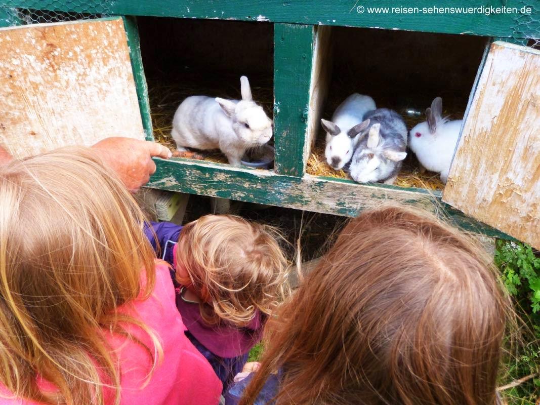 Kinder mit Kaninchen Urlaub auf dem Bauernhof