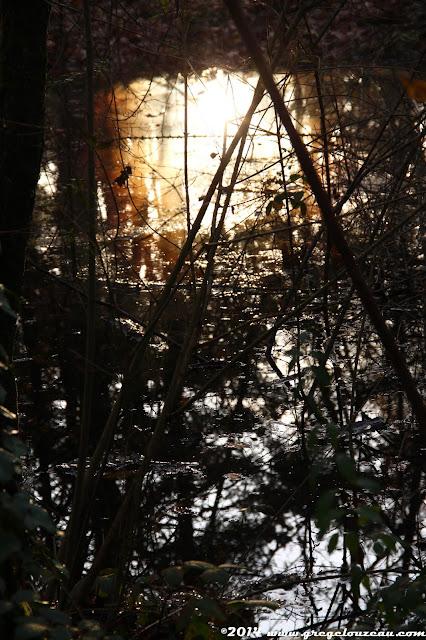 Mare, Forêt de Fontainebleau, (C) 2014 Greg Clouzeau