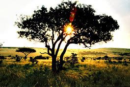 Kväll på savannen
