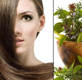 Herbal Hair Loss Remedies That Offer Hope