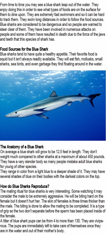Blue shark facts for kids