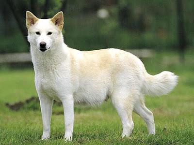 Movimiento de cola en Perros