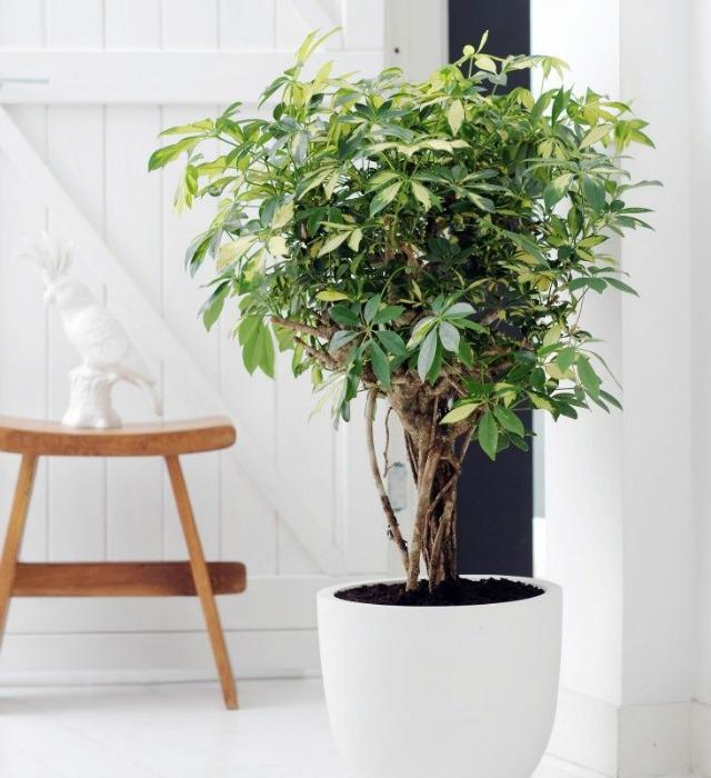 Decoraci n f cil 10 mejores plantas de interior - Las mejores plantas de interior ...