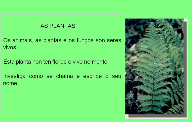 http://educalim.com/biblioteca/plantas/PLANTAS.html