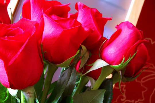 Una frase para cada dia Flores-de-rosas-rojas