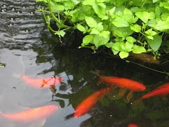 .My Pond
