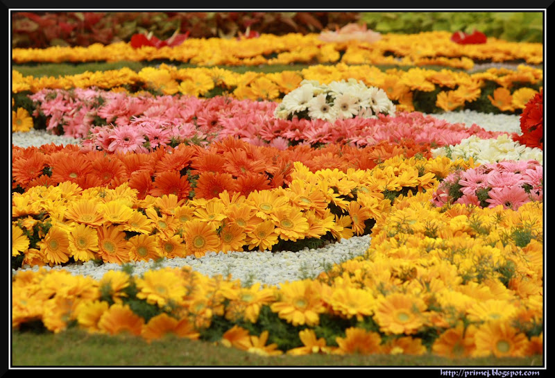Lalbagh Flower Show August 2011
