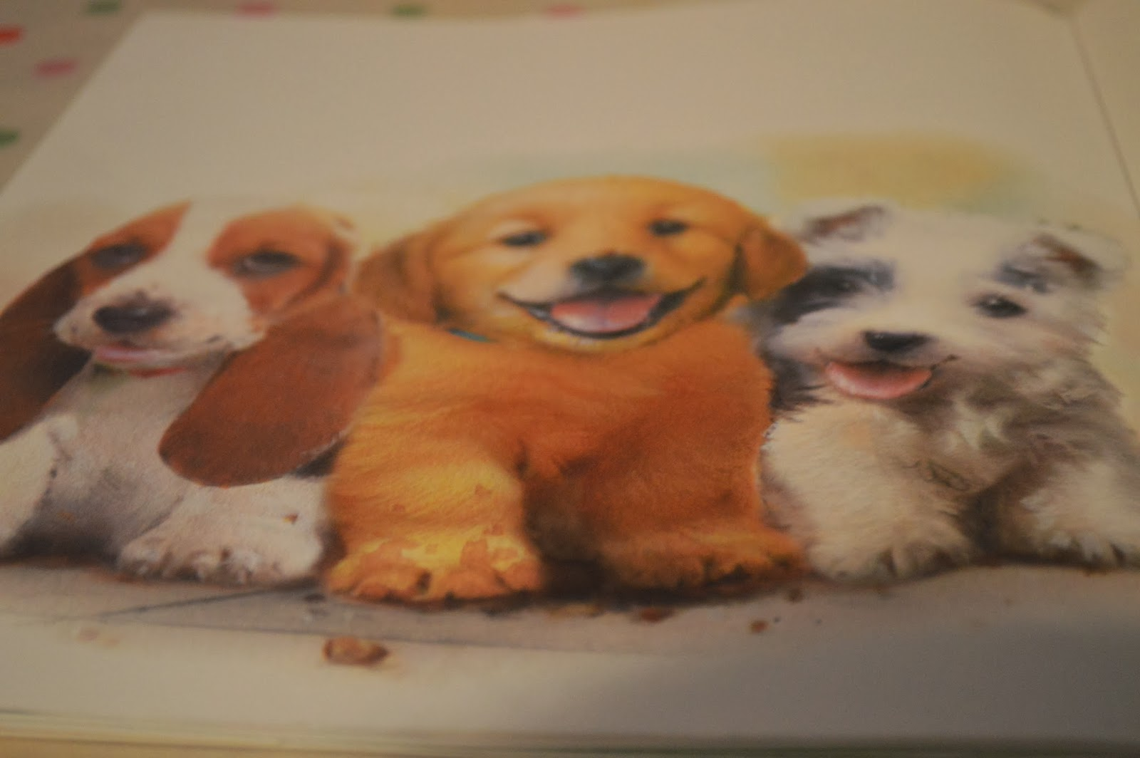 Muddypaws' New friends Children's Book Review Parragon Book Buddies