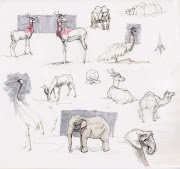 Kansas Zoo Animals. Wife and I are zoo people. Here's some drawings I did .
