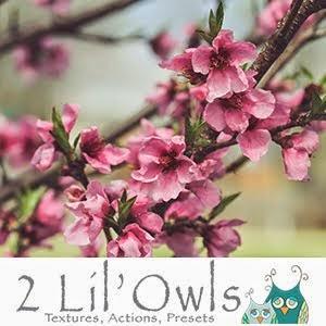 2lilowls