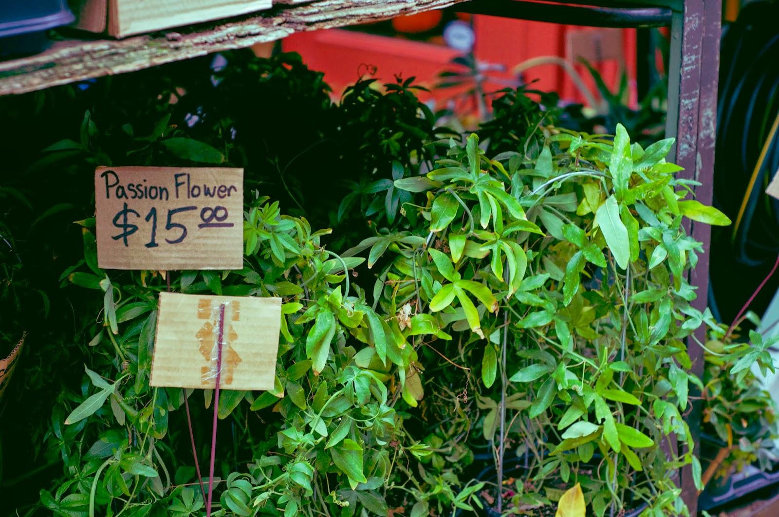 plant in granville market, vancouver
