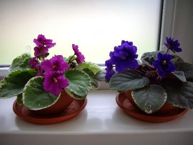 Perennes peque as colecci n de hojas y flores - Macetas de porcelana ...