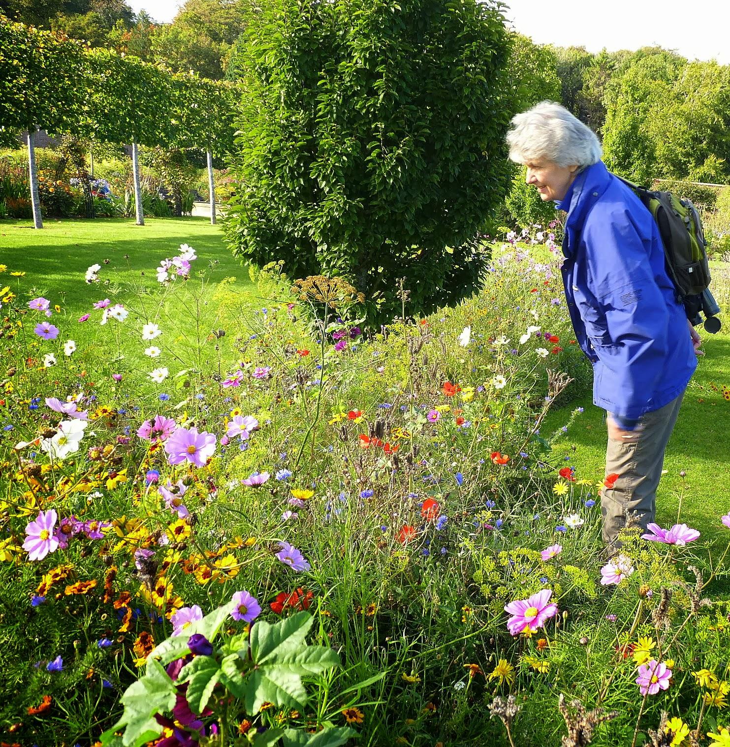 Birding for pleasure walk through the walled garden - When you walk through the garden ...