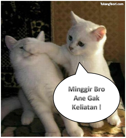 Gambar Kucing Lucu Untuk Komentar Facebook Dulayex Blog