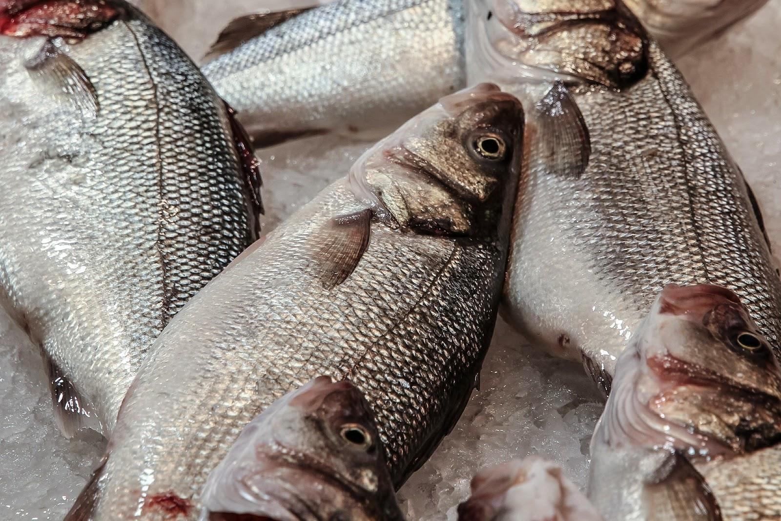 Πώς ξεχωρίζουμε τα φρέσκα από τα μπαγιάτικα ψάρια;