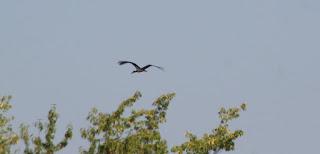 Huge birds, these storks