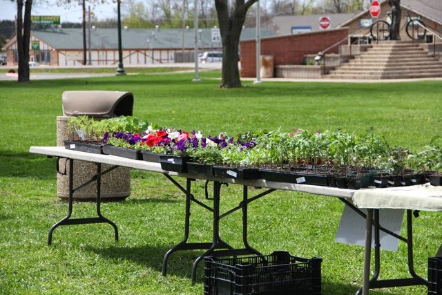 a plant table at Chisago City Farmer's Market
