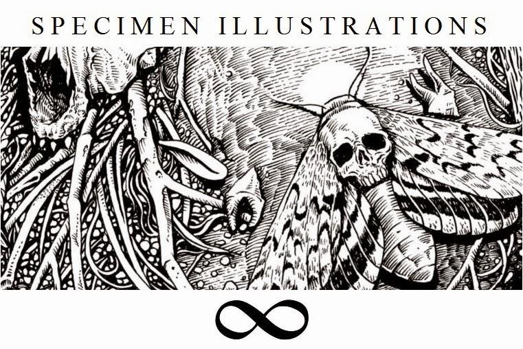 Specimen Illustrations