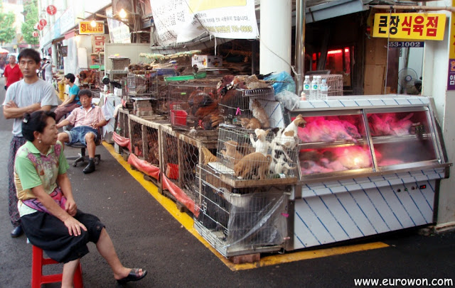 Perros a la venta en un mercado coreano