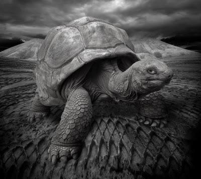 dicas fotos animais tartaruga