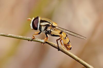 Gambar Bagus Lalat