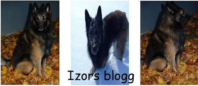 Izors blogg