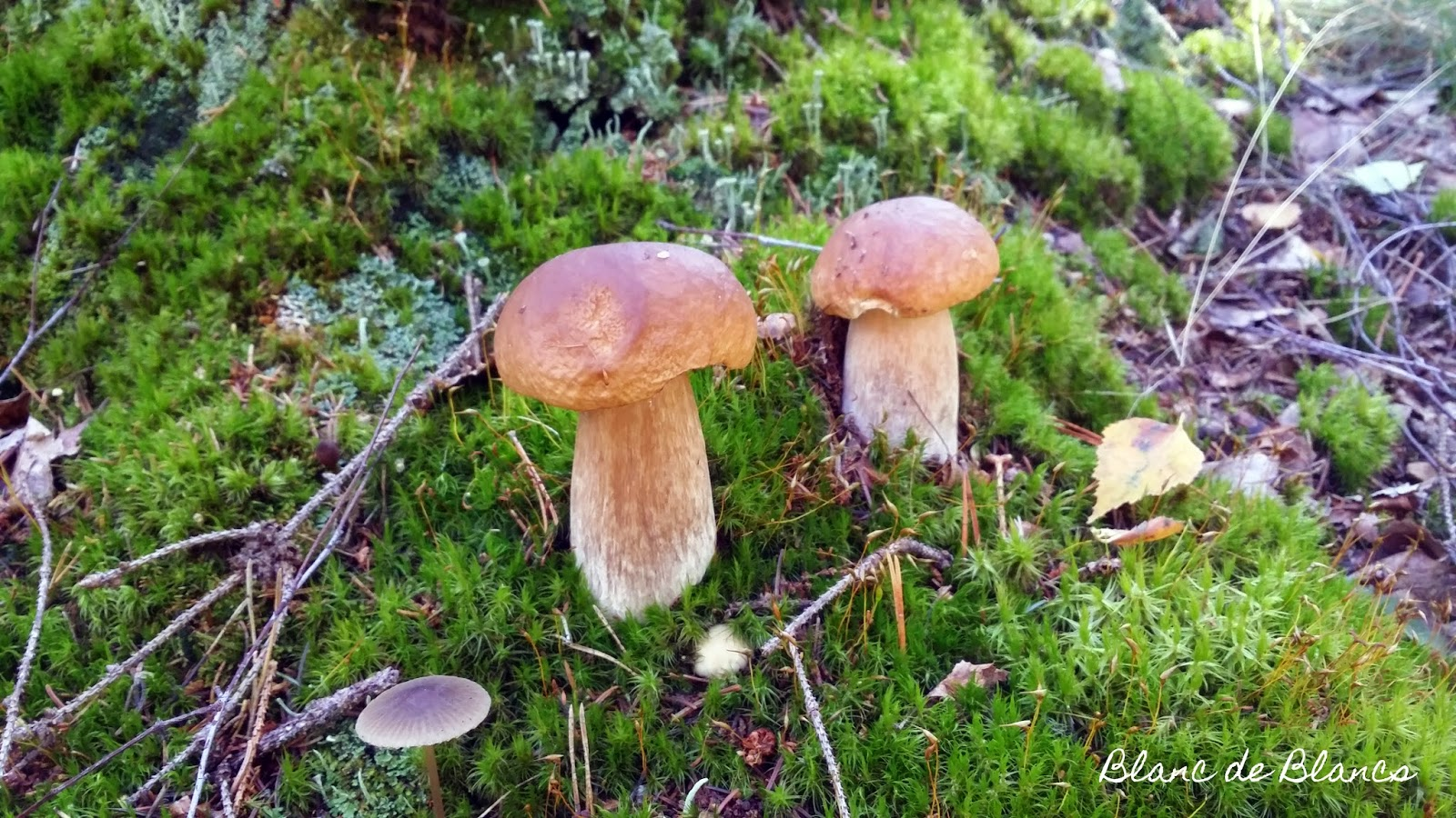 Herkkutattilöytö - www.blancdeblancs.fi