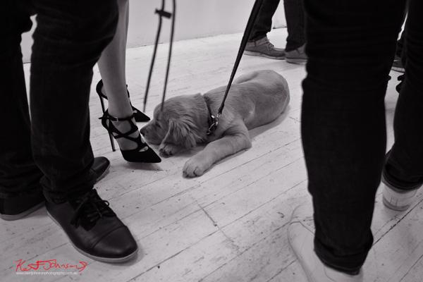 Black brogues, black cut away heels, Labrador puppy! Photographed by Kent Johnson for Street Fashion Sydney.