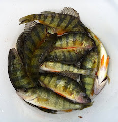 Yellow Perch are very active in the wintertime