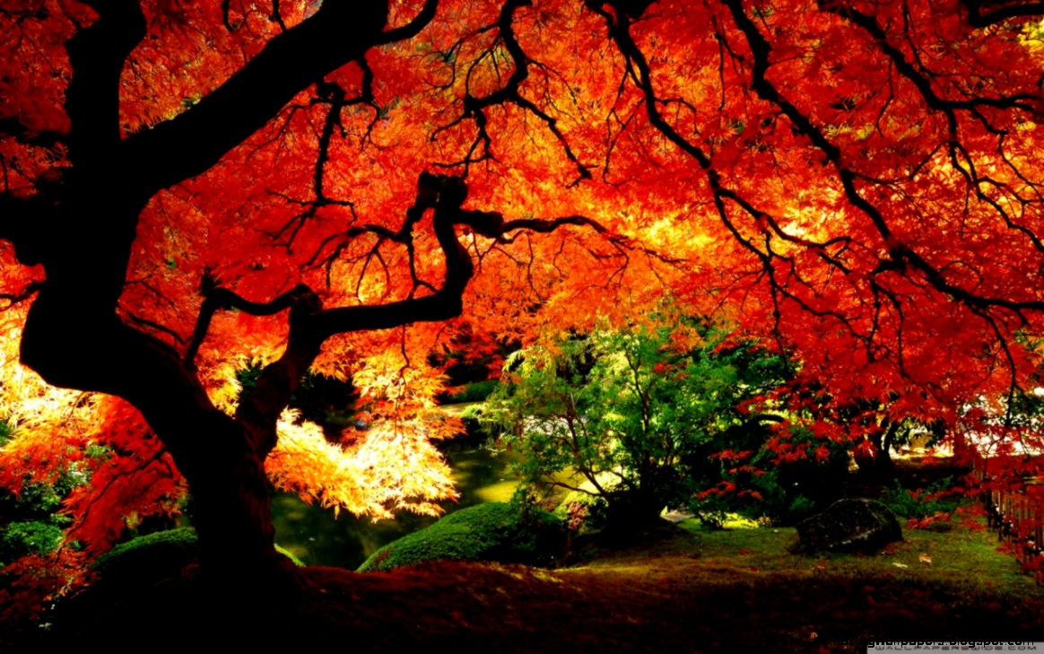 Beautiful Autumn HD desktop wallpaper  Mobile  Dual Monitor