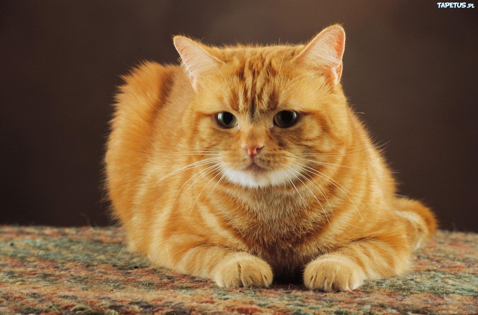 Garfield Kot Domowy Gdzie żyją Zwierzęta Z Filmów Animowanych